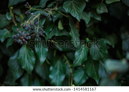 Natural leaf background, natural plant natural leaves #1414581167