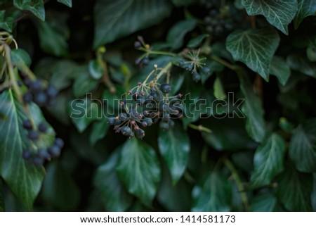 Natural leaf background, natural plant natural leaves #1414581173