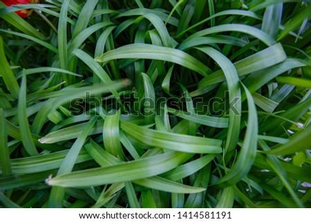 Natural leaf background, natural plant natural leaves #1414581191