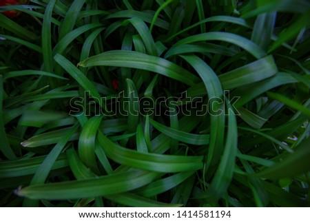 Natural leaf background, natural plant natural leaves #1414581194