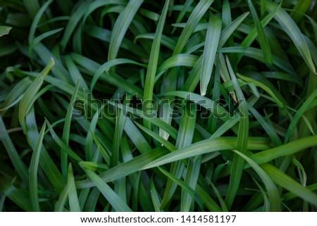 Natural leaf background, natural plant natural leaves #1414581197
