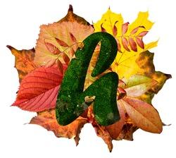 Natural leaf letter H, vibrant color alphabet, isolated design element, autumn colors, lowercase