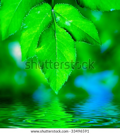 Natural leaves background. Green, fresh and ready to use.