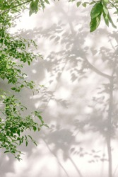 Natural leaves shadow background of tree branch falling on white concrete wall texture for background, black and white monochrome tone
