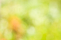 Natural light Green Abstract bokeh background