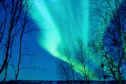 Natural looking multicolored green and blue aurora borealis (northen lights) with dark tree branches on the border of Finland and Norway
