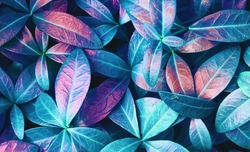 Natural macro texture of beautiful leaves toned in blue and purple pink tones. Flat lay.