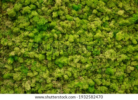 Natural moss in nature. Green moss background texture.