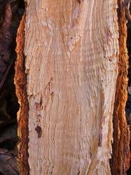 natural motif of split wood