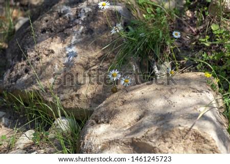 Natural natural stone in the natural environment Sunny day.