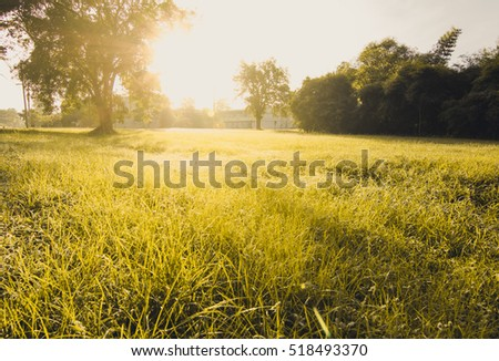Natural of life - Shutterstock ID 518493370