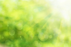 Natural outdoors bokeh  in green and yellow tones with sun rays