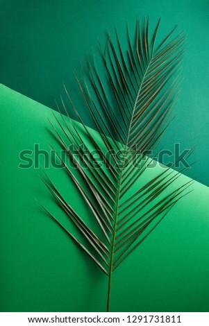 Natural Palm