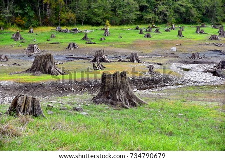 Natural Pasture with lot of cut trees, picture with a message to Protect or conserve the environment #734790679