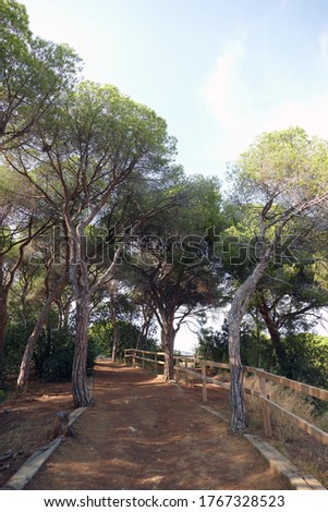 Natural path in a spanish park with pine needles on the ground. Surrounded by pines, trees and other plants on a sunny day.