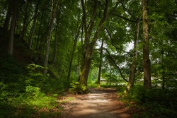 Natural path in the forest