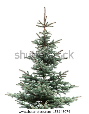 Natural photo of young fir tree isolated on white background