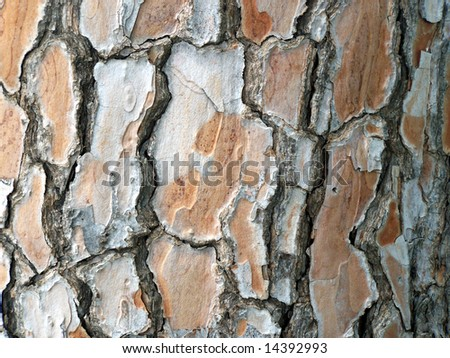 natural pine tree bark abstract background