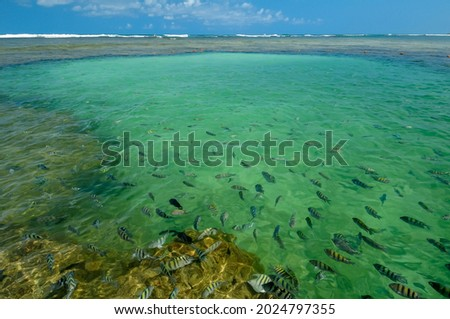 Natural pools with many small fish on the beach of Porto de Galinhas, Ipojuca, near Recife, Pernambuco State, Brazil on October 2, 2008. Foto stock ©
