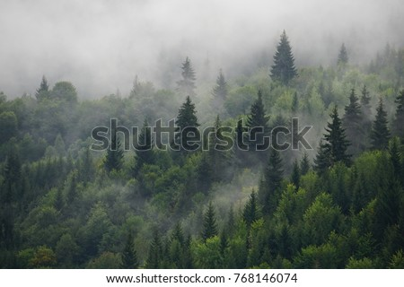 Natural rain forest