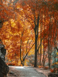 Natural red forest with footpath