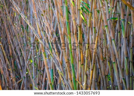 Natural reeds in a natural reserve