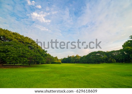 Natural scene green meadow with tree in central public park, Spring and summer concept #629618609