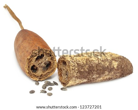Natural scrubber of dried Ridge gourd over white background