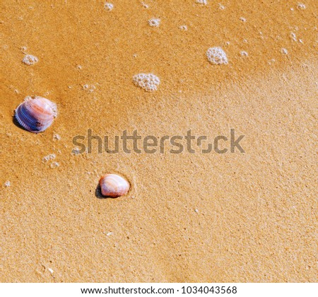 natural sea shell lying on the sandy beach, washed by water, sunny day, holiday #1034043568