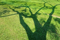 natural shadow of tree on green grass texture
