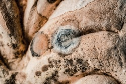 Natural shape background with macro. Poisonous mold texture. Mold on food. Controversy
