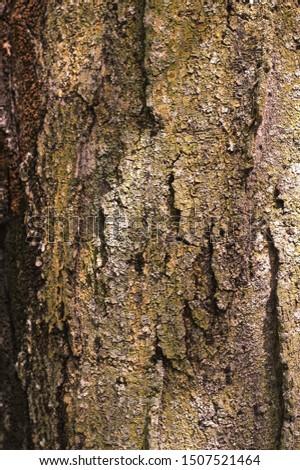Natural skin in natural environment