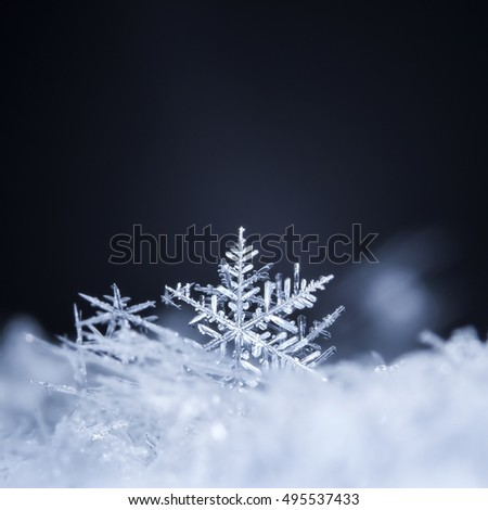 natural snowflakes on snow, photo real snowflakes during a snowfall, under natural conditions at low temperature #495537433
