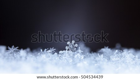 natural snowflakes on snow, photo real snowflakes during a snowfall, under natural conditions at low temperature #504534439
