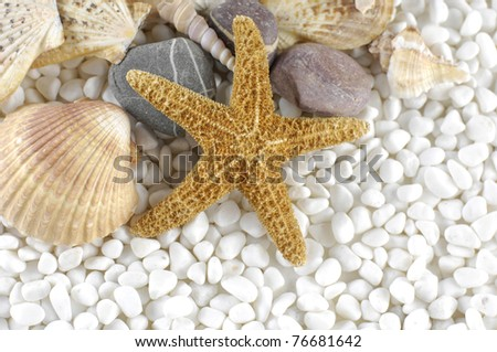 Natural spa elements- seashell with starshell and stones on white pebbles