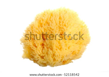 Natural sponge isolated on white