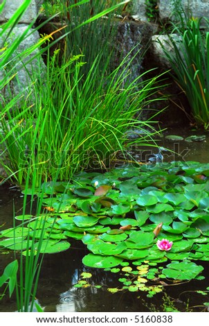 Natural stone pond lanscaping with aquatic plants and water lilies