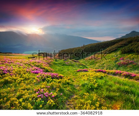 stock photo natural summer scene in carpathian mountains fresh grass and rhododendron flowers glowing last 364082918 - Каталог — Фотообои «Природа, пейзаж»