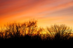 Natural Sunset with trees silhouette. Bright Dramatic Sky And Dark Ground. Warm Colours. Tree silhouetted against a setting sun.  Photo of the sky. Background with sky