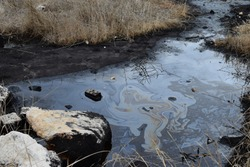 Natural tar water asphalt pit in swamp wetland.