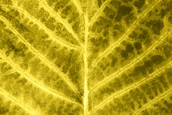 Natural texture background with details. Skeletal leaf An autumn leaf with yellow and brown spots. Macro