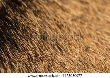 antelope valley skins