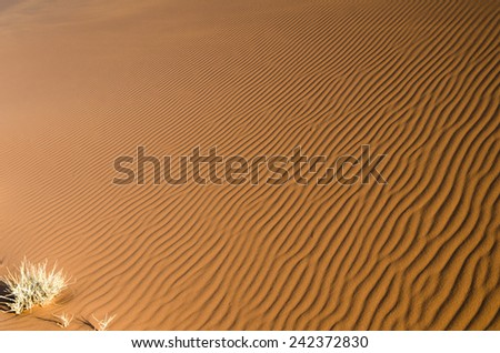Natural texture - sand background. Sand dunes in Namibia, Africa