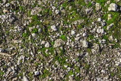 Natural texture with stones, earth and grass