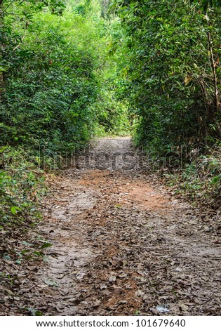 Natural trail though the forest in countryside of Thailand.