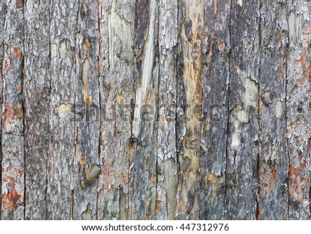 Natural tree bark plank texture. Untreated rustic wood background, rough timber plant surface. Weathered grunge styled fence. #447312976