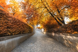 Natural Trees and Walkway at Public Park in Autumn, Beautiful Scenic View of Outdoor Garden Tree Plant in Autumn Season at Zurich City Switzerland. Landscape of Swiss Outdoors Gardening Green Park
