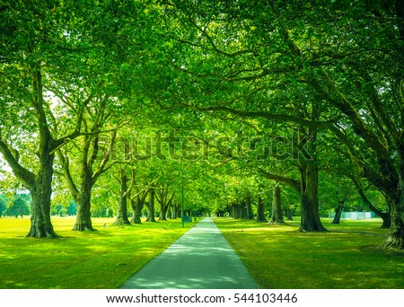 Natural View of Walkway in the Park, Christchurch, New Zealand. Beautiful Pathway with Green Trees. - Shutterstock ID 544103446
