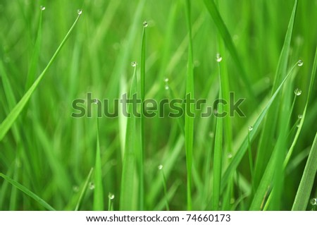natural water drops on fresh green grass in the morning