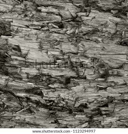 Natural Weathered Grey Taupe Brown Cut Tree Stump Texture. Large Detailed Wounded Damaged Vandalized Gray Lumber Background Wood Macro Closeup. Dark Black Textured Cracked Wooden Pattern  #1123294997